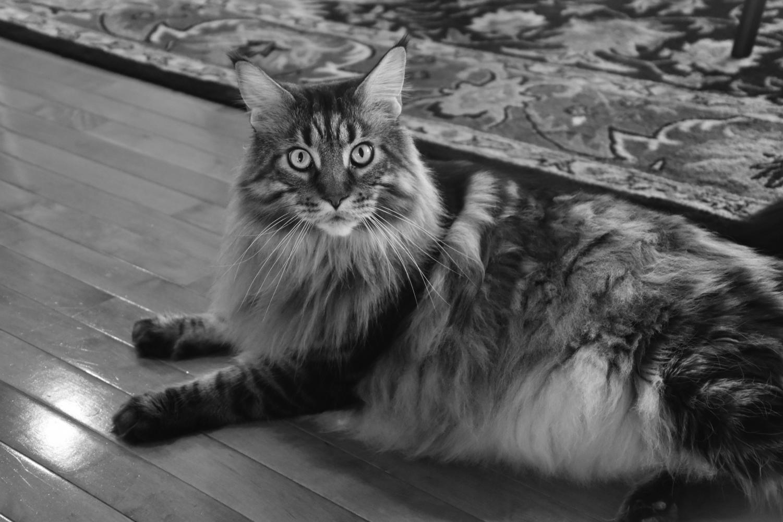 Amelia Winkelman's cat, Astro