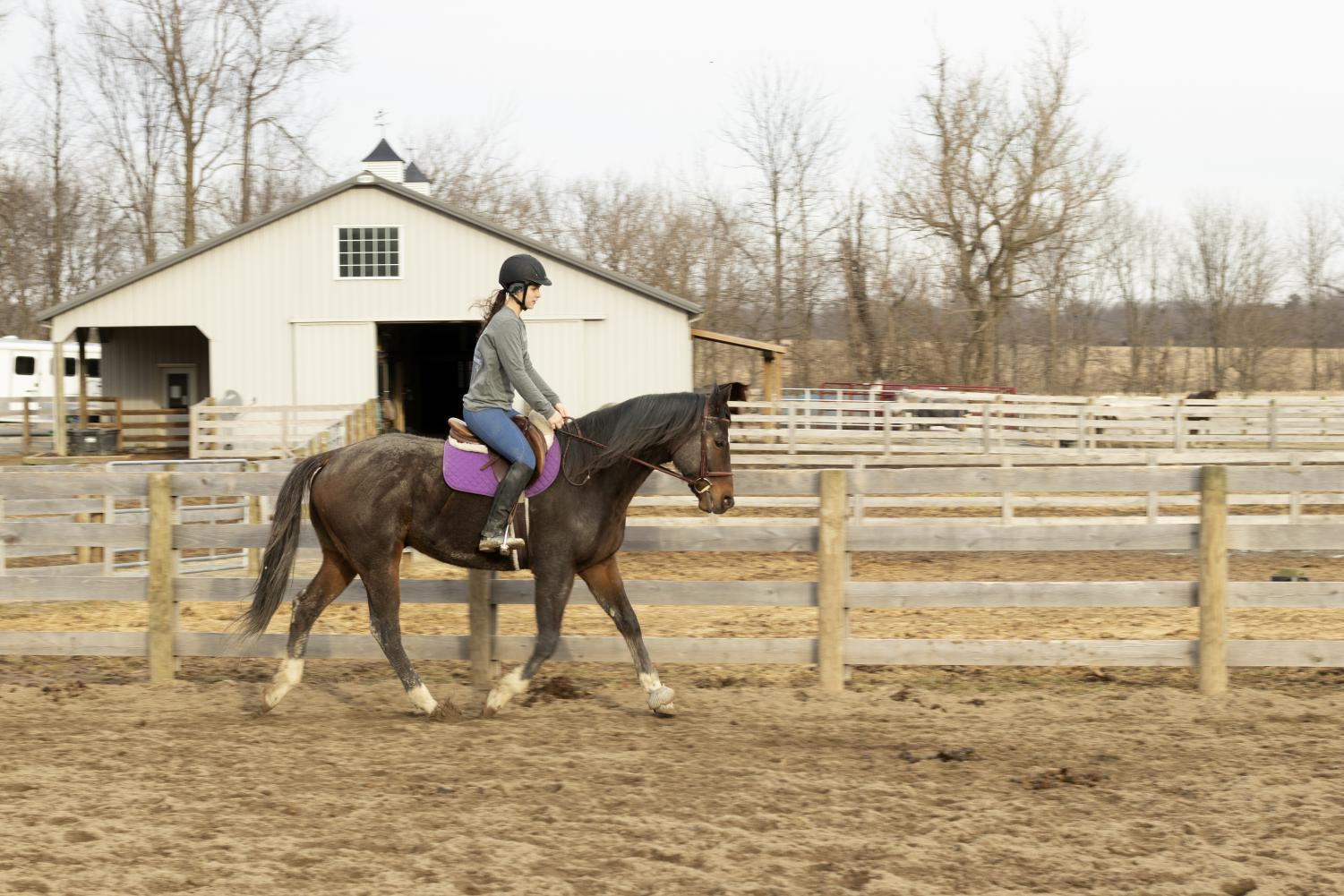 Marin Hadley, 11 rides horse Trypp at Rebel Heart Farm. Hadley often exercises horses for other riders while they are away.